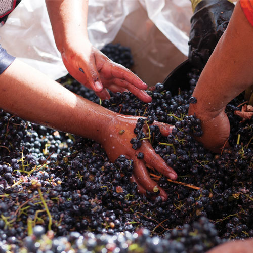 wine, wine making