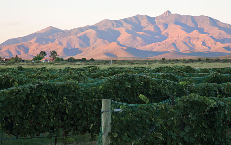 pillsbury vineyard, Chiricahua Mountains