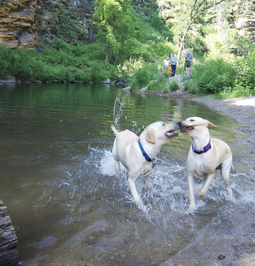 photo by Mare Czinar; dogs on the beach at Kinder Crossing