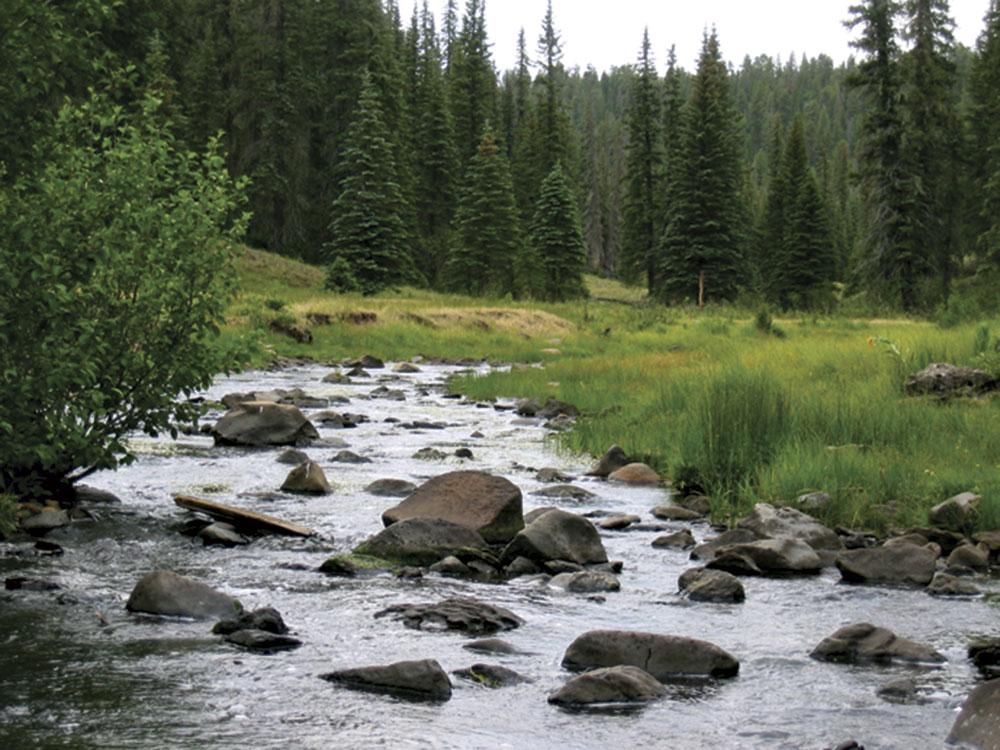 photo by Todd Halvorsen; scenes from Thompson Trail