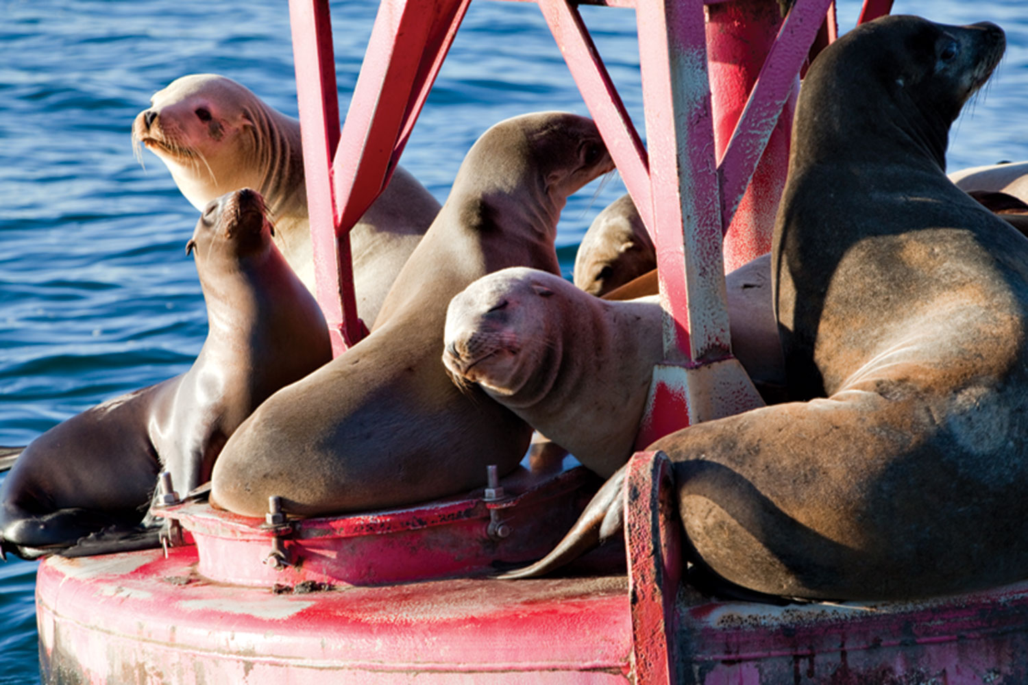 Photos courtesy Visit Ventura; Leah LeMoine; sea lions in Ventura Harbor