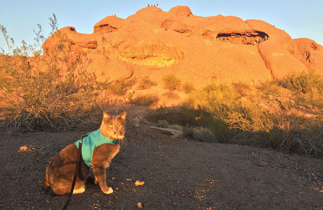 Roger the Hiking Cat