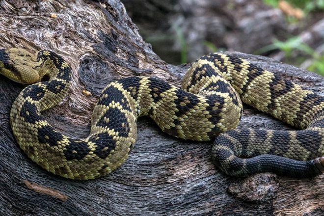 Solving the Snake