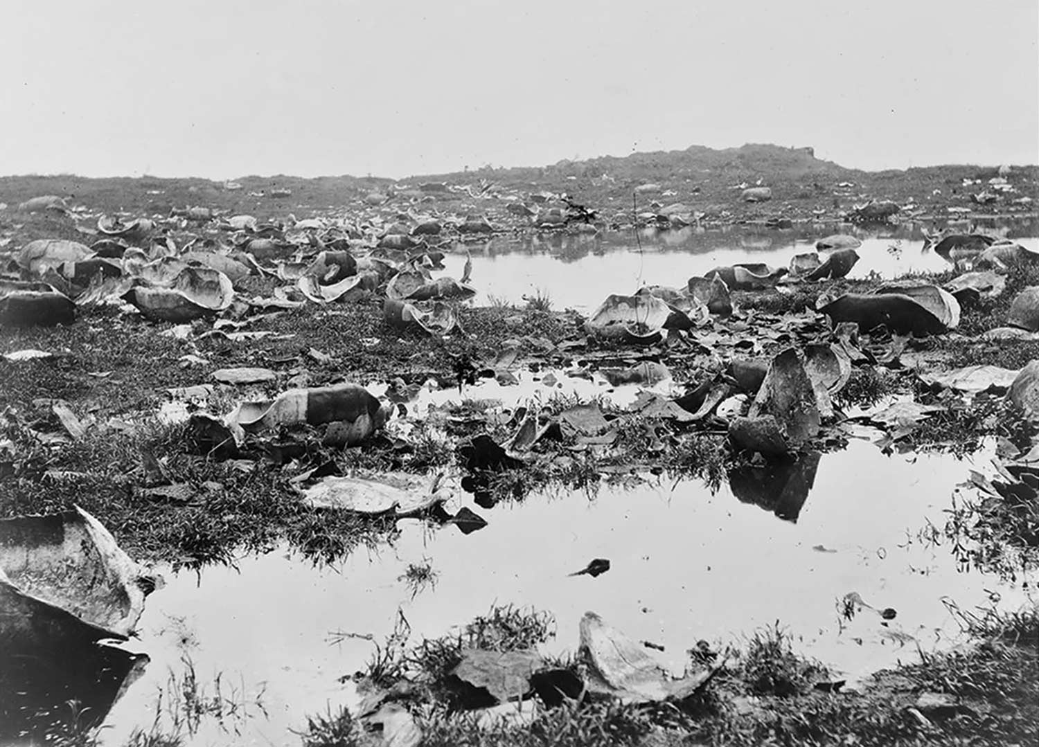 historic photo courtesy Library of Congress; the remnants of slaughtered tortoises on the Galápagos Islands, circa 1903