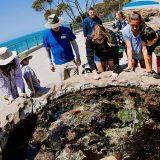 10 Unique Experiences at Birch Aquarium You Won't Want to Miss