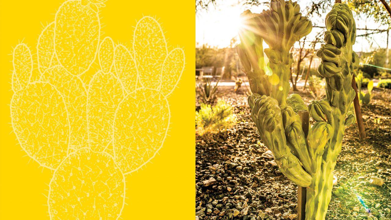 https://www.phoenixmag.com/wp-content/uploads/2019/03/phm0419_cactus01feat-1280x720.jpg