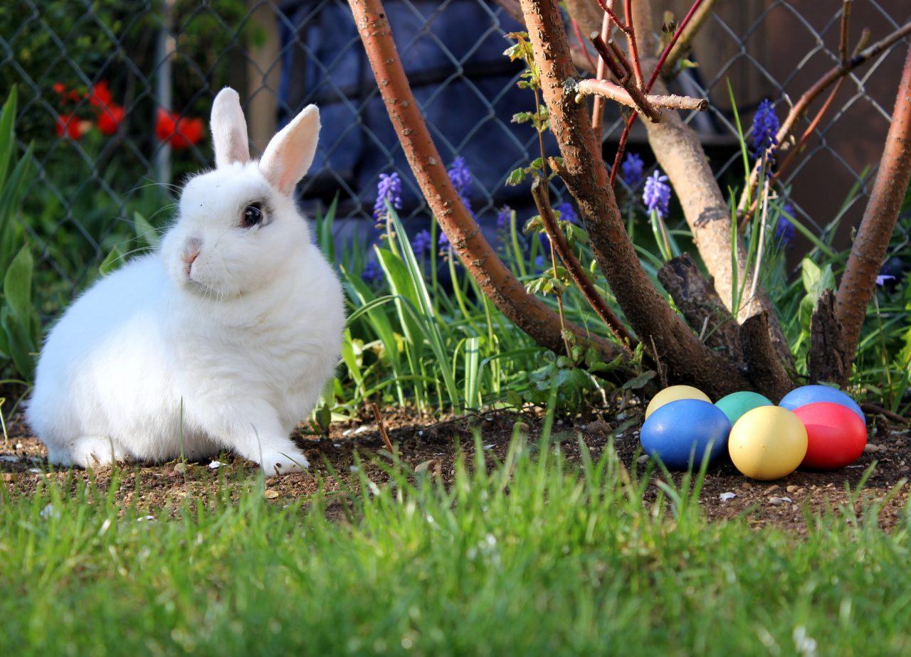 https://www.phoenixmag.com/wp-content/uploads/2019/04/Easter_bunny-1280x924.jpg