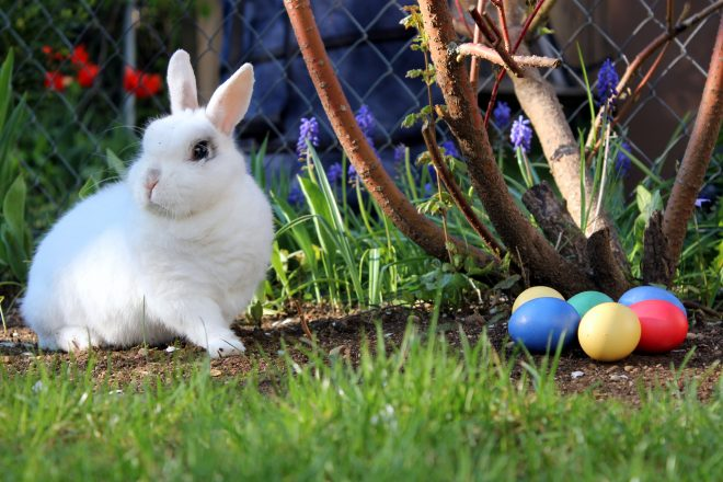 Free Easter Events in Phoenix