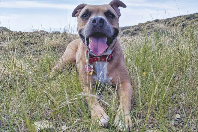 Citizen Hiker: The Best Dog on The Mountain