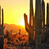 5 Phoenix Summer Rites of Passage