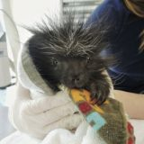 Southwest Wildlife Conservation Center Reports Spike in Orphaned Animals