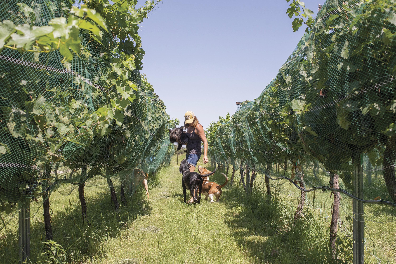 Four Tails Vineyards; Photo by Mark Lipczynski