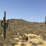 Land Zo: Saguaro Standoff