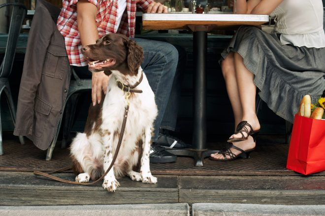 4 Dog-Friendly Date Spots in Phoenix