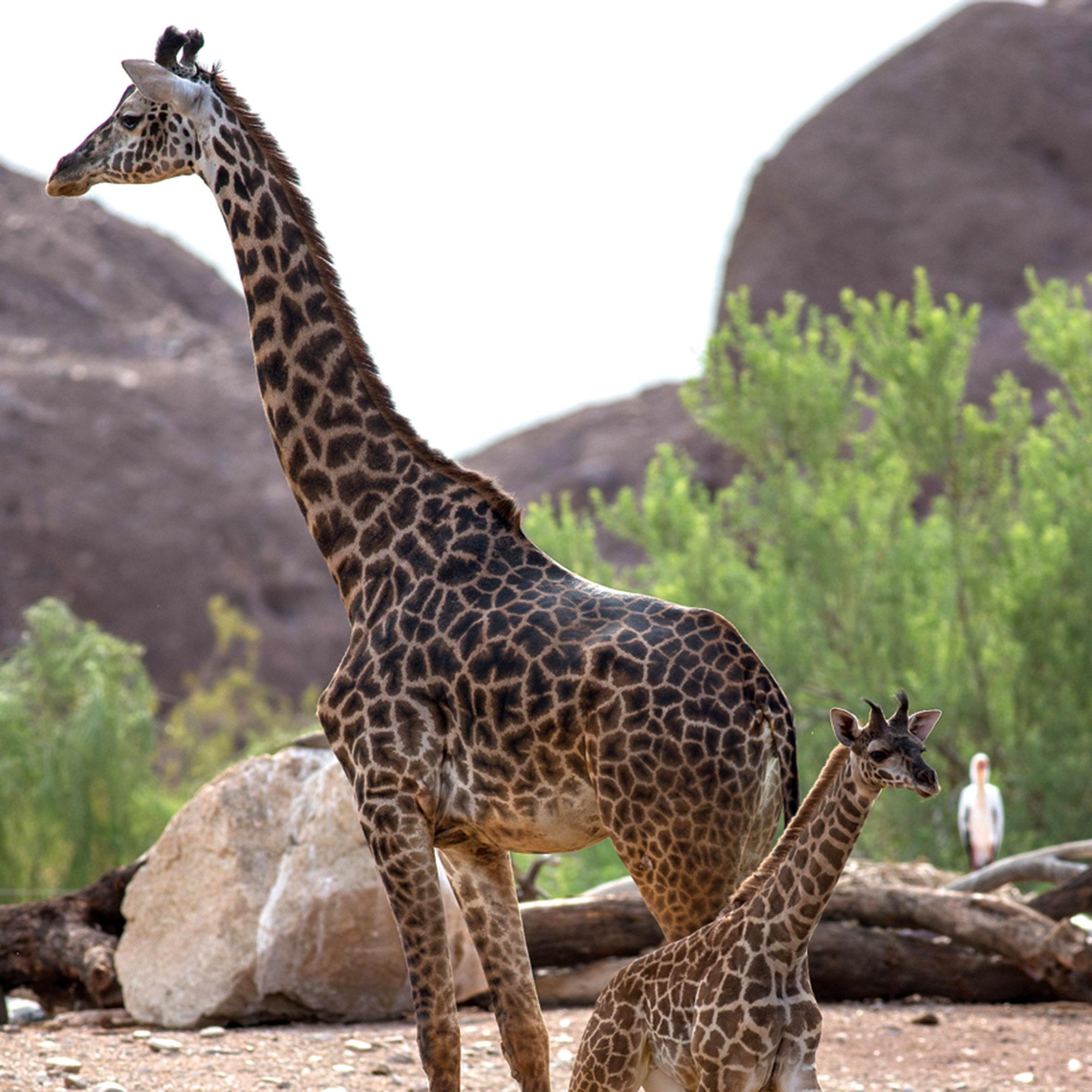 Photo courtesy Phoenix Zoo