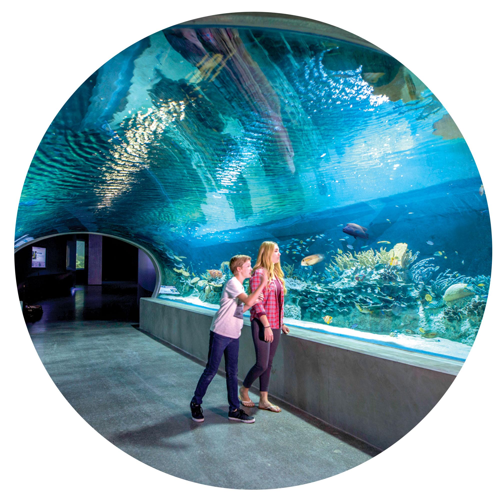 Photo courtesy Odysea Aquarium