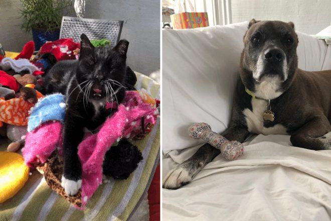 Coronavirus Chronicles: Pet Rescues