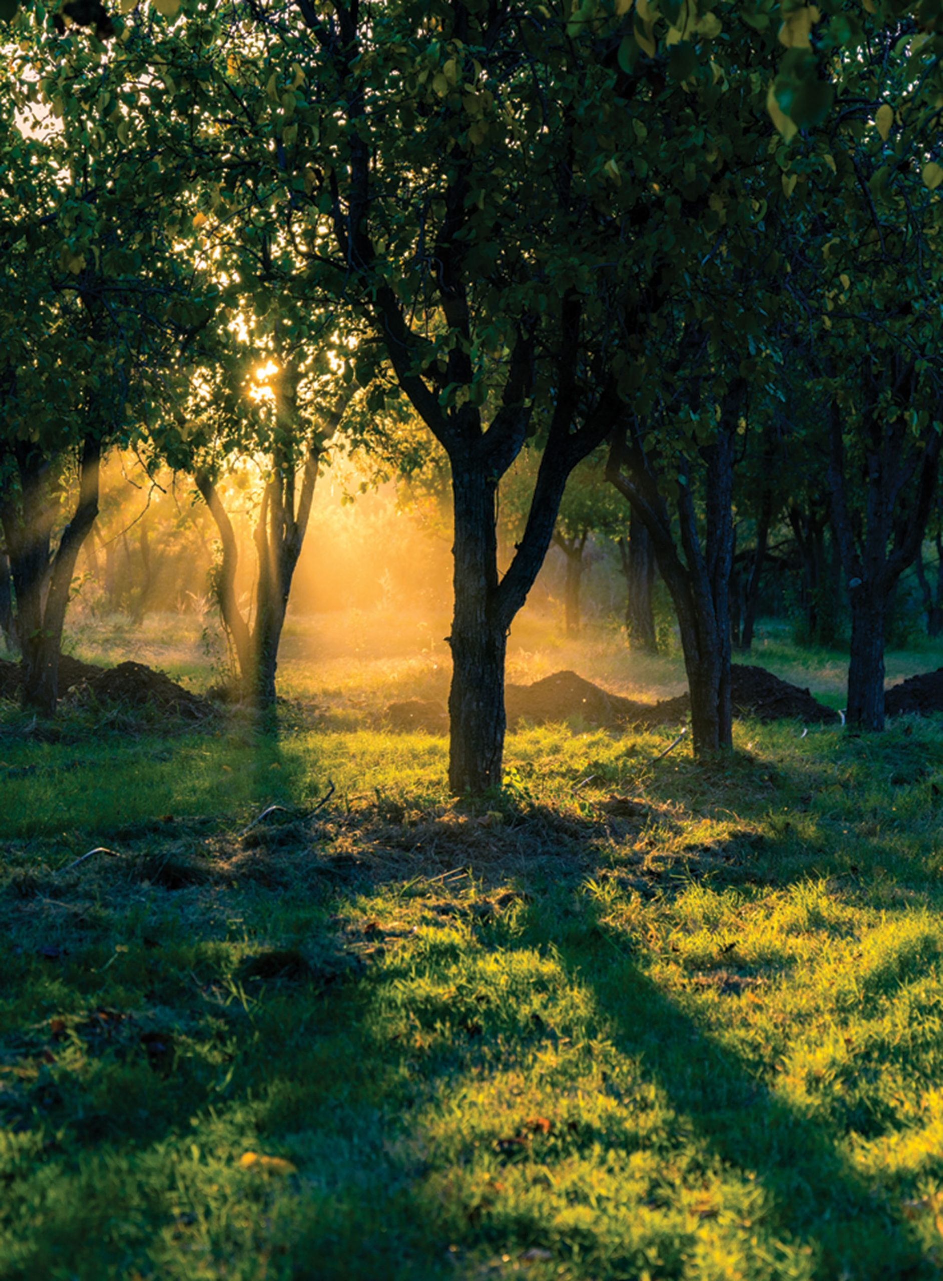 sunlit orchard; Photo by Jack H. Taylor