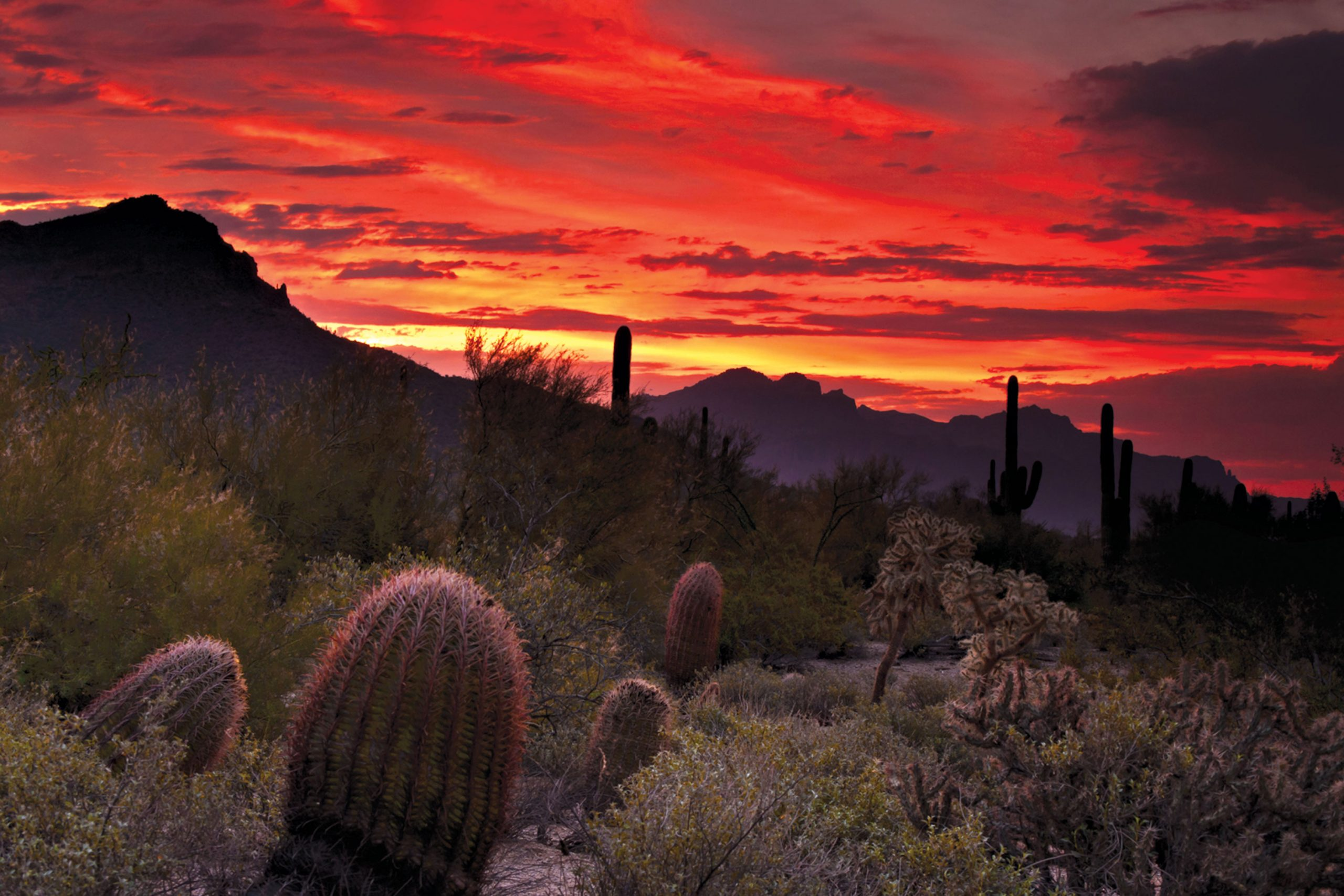 Usery Mountain Regional Park; Photo courtesy Adobe Stock Images