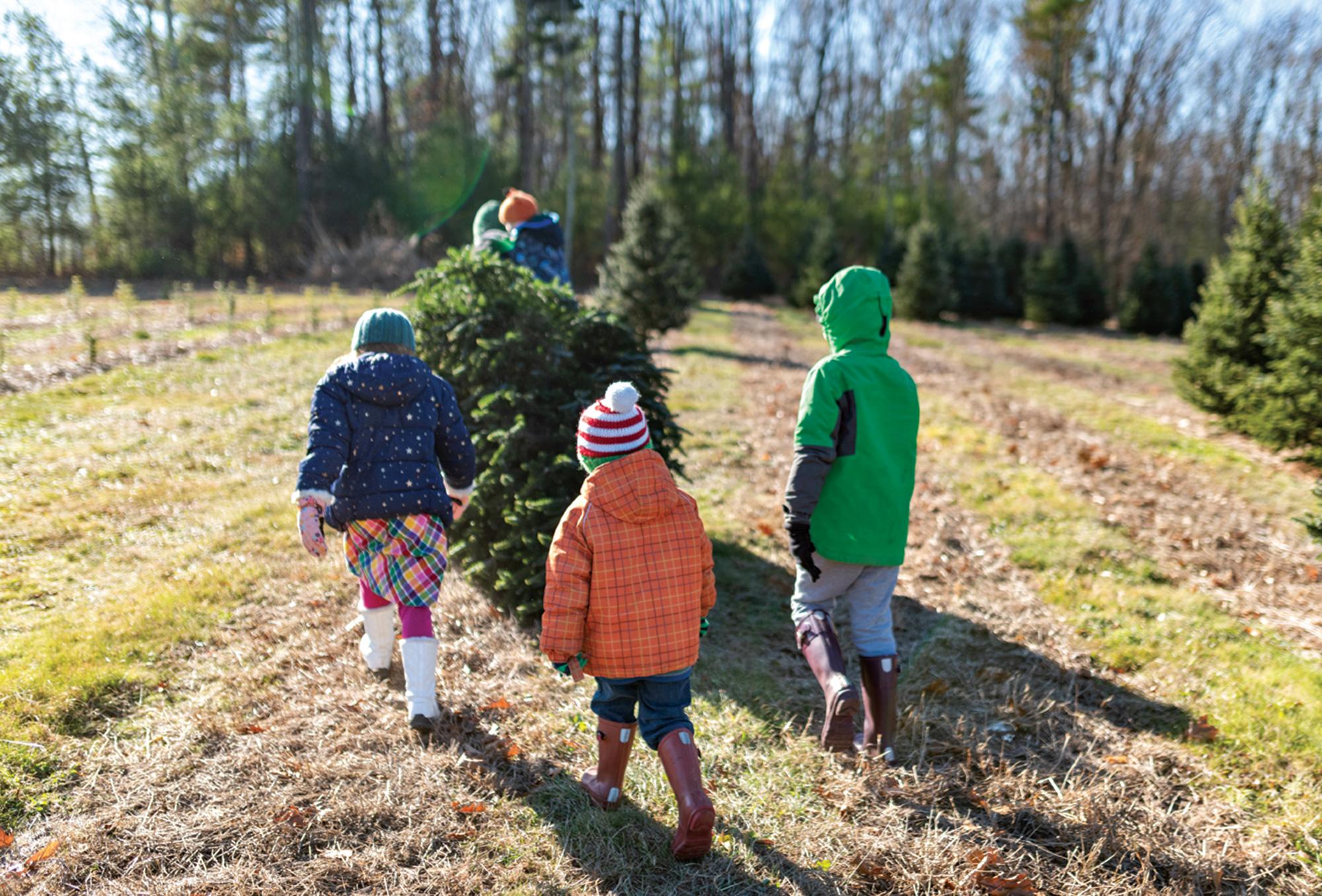 Christmas tree cutting; Photo courtesy Adobe Stock Images