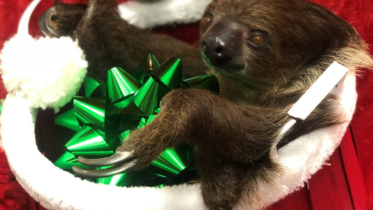 https://www.phoenixmag.com/wp-content/uploads/2020/12/sloth-holiday-photo-1280x720.jpeg