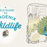 A Field Guide to Phoenix Wildlife