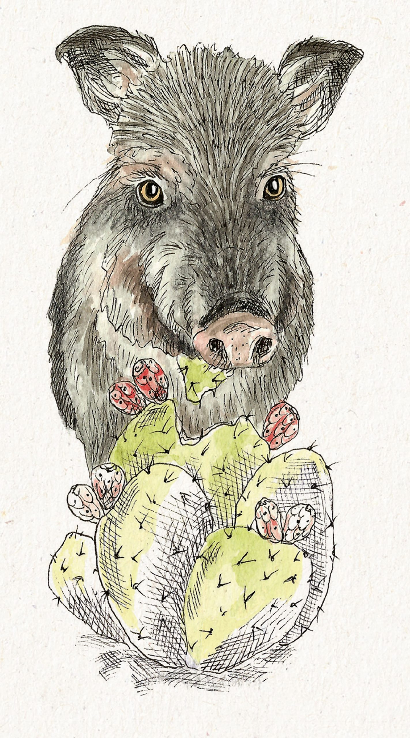 Illustrations by Nathalie Aall