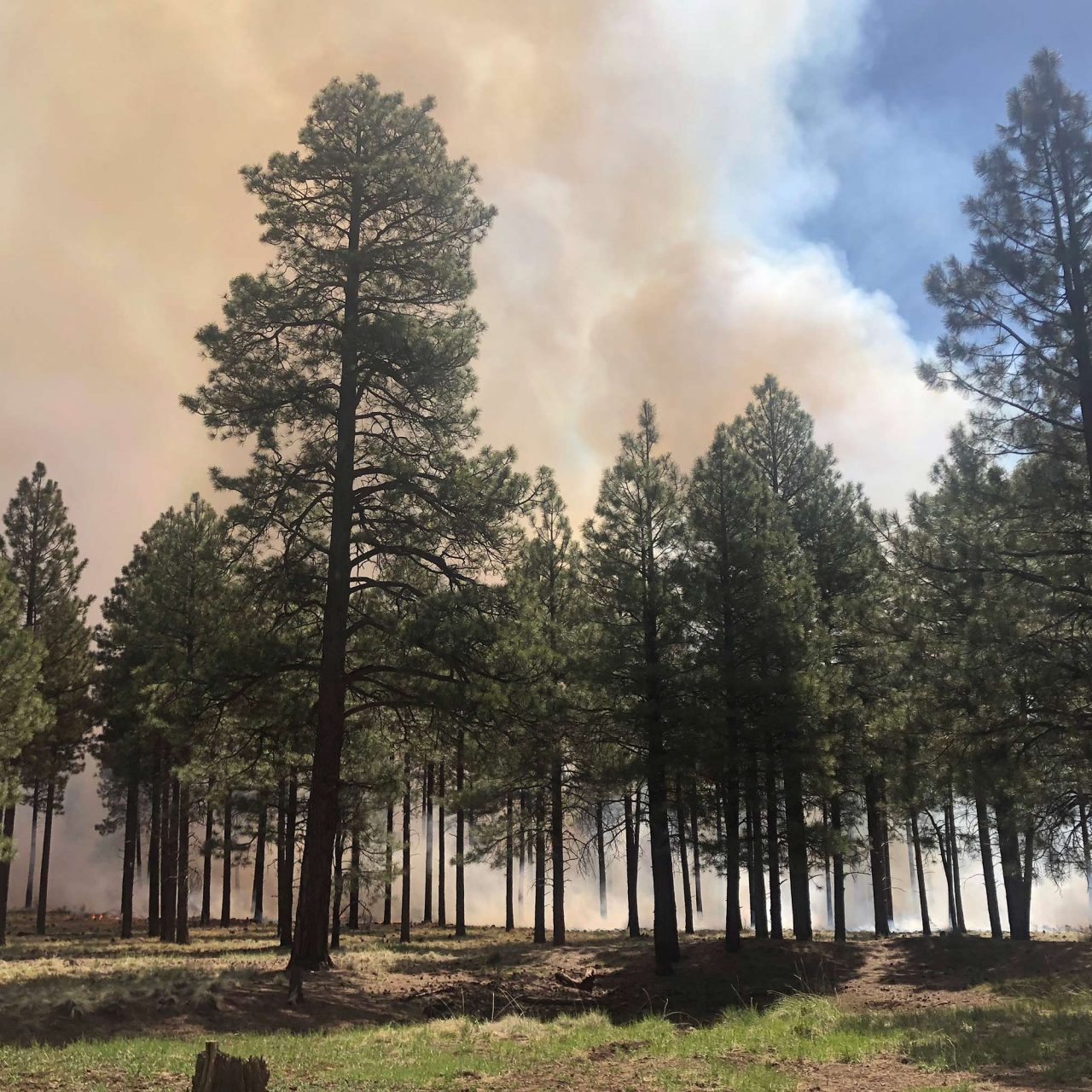 Be Aware of Fire Restrictions and Prescribed Burns This Summer