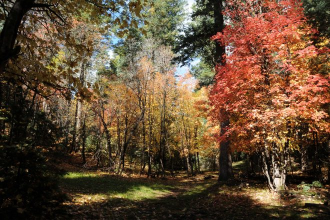 Barbershop Trail Hike in the Coconino National Forest