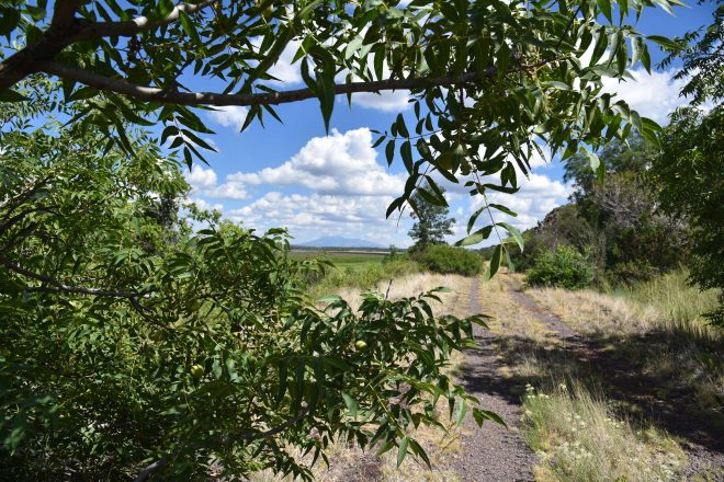 Berry Road Hike in Coconino National Forest