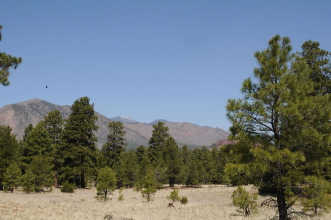 Campbell Mesa Trails to Hike in Flagstaff