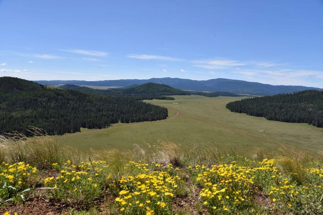 Hike Greens Peak in the Apache-Sitgreaves National Forest