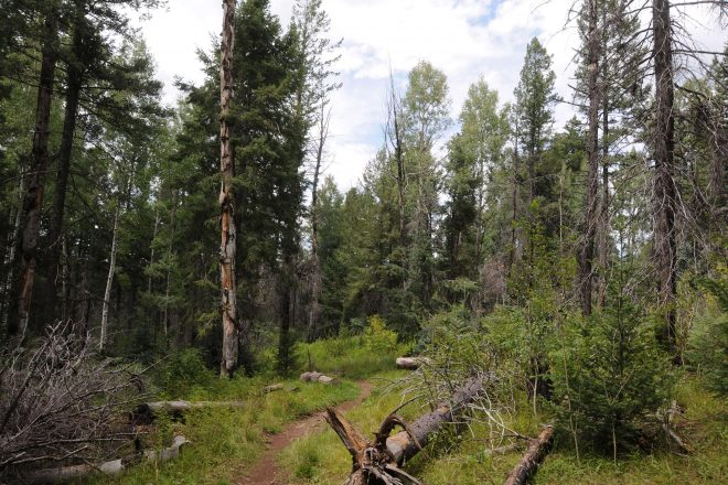 Hiking the Indian Springs Trail in Apache-Sitgreaves National Forest