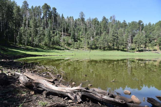 Potato Lake Hike in the Coconino National Forest