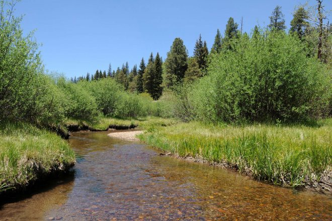 Hiking the Railroad Grade Trail in Apache-Sitgreaves National Forest