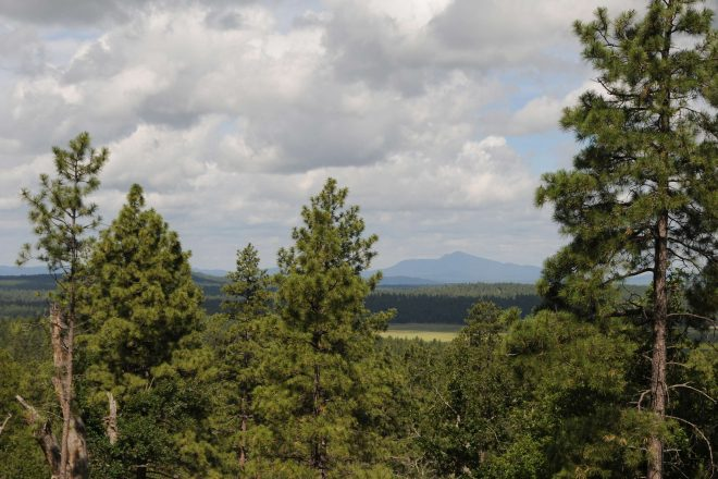 Hike the Rogers Lake County Natural Area in Flagstaff