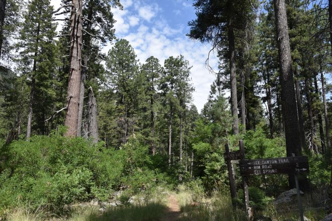 See Spring & See Canyon Hikes in the Tonto National Forest