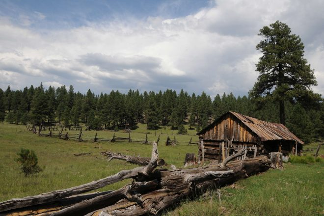 Sunflower Flat and J.D. Cabin Hikes in the Kaibab National Forest