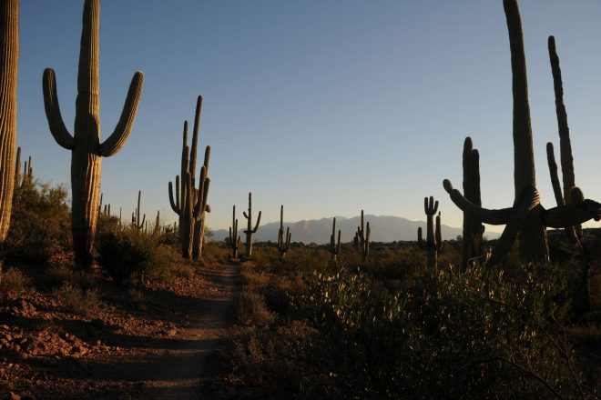 Sweetwater Preserve Hike in Tucson