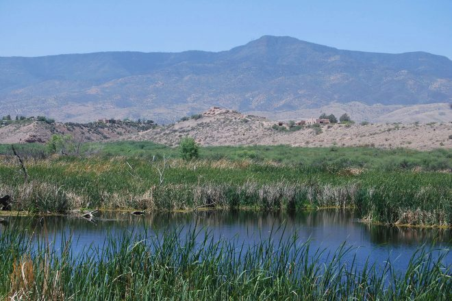 Hike Tavasci Marsh at Dead Horse Ranch State Park