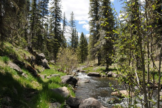 Hiking the Thompson Trail in the Apache-Sitgreaves National Forest