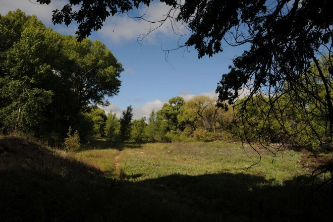 Watson Woods Riparian Preserve Hike in Prescott