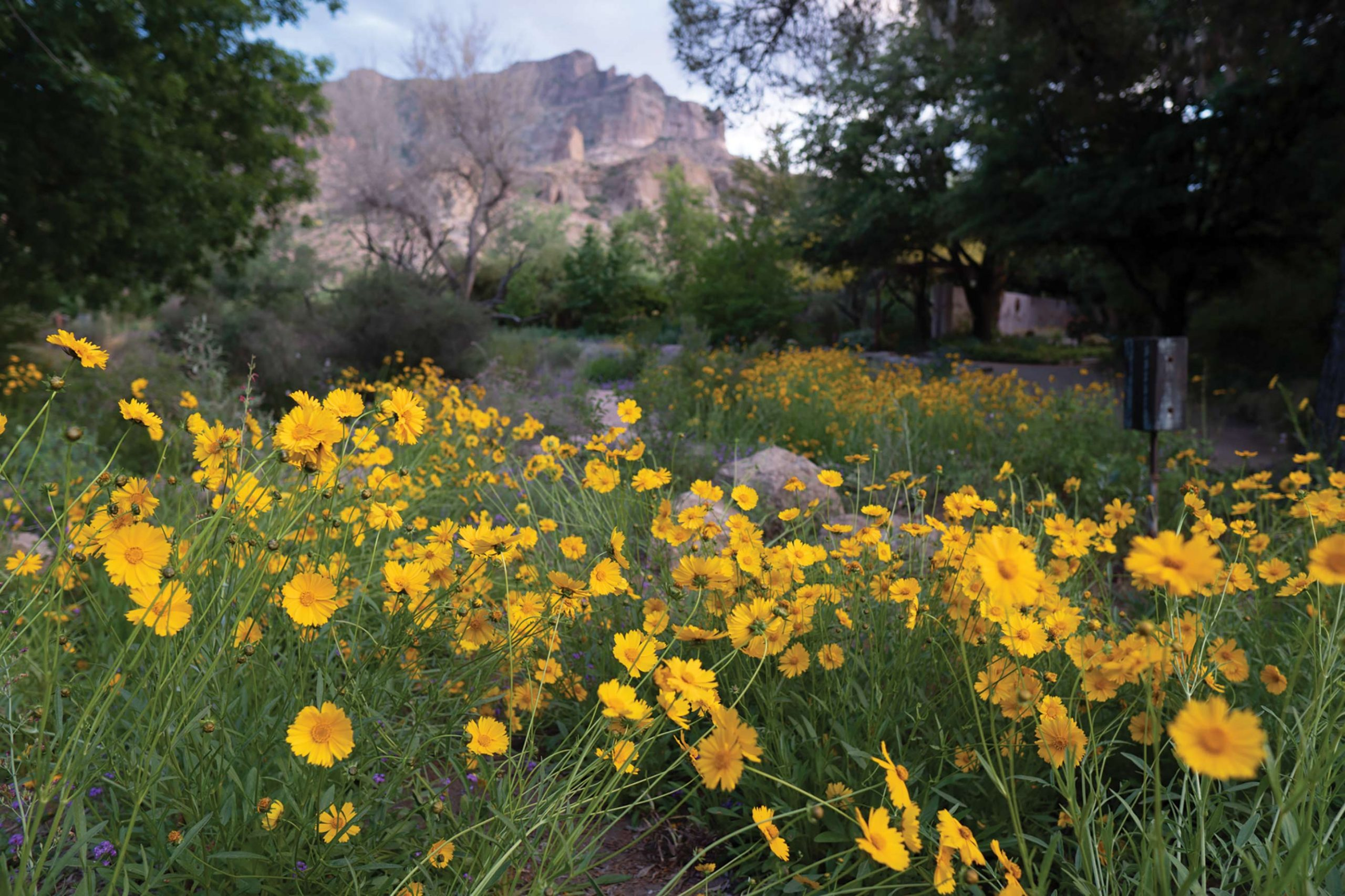 Photo courtesy Boyce Thompson Arboretum