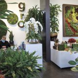 Business Buzz: Plant Solutions Uses Nature to Ease Employees Back to Work