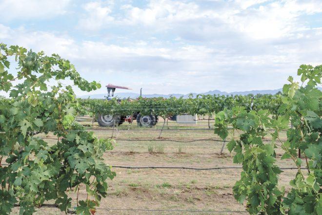 How Bodega Pierce Winery Creates a Vintage for Hidden Track Bottle Shop